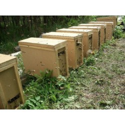 Бджолопакети порода бджіл Карпатка